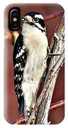 Downy Woodpecker 6 IPhone Case