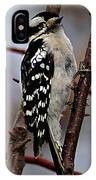 Downy Woodpecker 7 IPhone Case