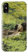 Duck Dinner IPhone Case