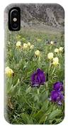 Dwarf Iris (iris Pseudopumila) IPhone Case