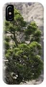 Dwarf Mountain Pine (pinus Uncinata) IPhone Case