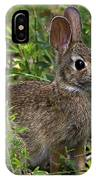 Eastern Cottontail Rabbit Dmam005 IPhone Case