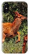 Elk Fawn IPhone Case