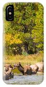 Elk Herd With Autumn Colors IPhone Case