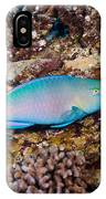 Ember Parrotfish IPhone Case