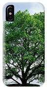 English Oak Quercus Robur In Spring IPhone Case