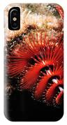 Feather Duster Feeding 2 IPhone Case