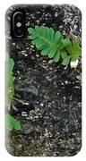 Fern And Coquina IPhone Case