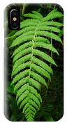 Fern Frond 0576 IPhone Case