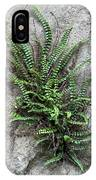 Fern Growing From Crack In Limestone IPhone Case