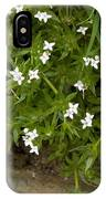 Field Madder (sherardia Arvensis) Flowers IPhone Case