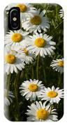 Field Of Oxeye Daisy Wildflowers IPhone Case