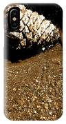Fools Gold And Pine Cone IPhone Case