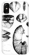 Fossilized Shells, 1844 IPhone Case