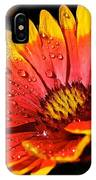 Gaillardia Flower IPhone Case