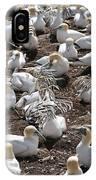 Gannets Showing Fencing Behavior IPhone Case