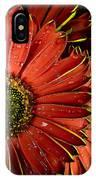 Gerbera Orange IPhone Case