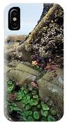 Giant Green Sea Anemone Anthopleura IPhone Case