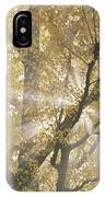 Ginkgo Tree With Sunlight Streaming IPhone Case