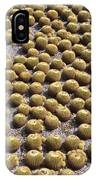 Golden Barrel Cactus 1 IPhone Case