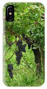 Grape Vines And Roses I IPhone Case