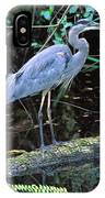 Great Blue Heron, Florida IPhone Case