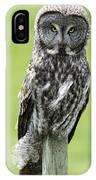 Great Grey Owl, Water Valley, Alberta IPhone Case