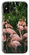 Greater Flamingo Phoenicopterus Ruber IPhone Case
