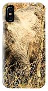 Grizzly In The Brush IPhone Case
