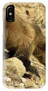 Grizzly On The Rocks IPhone Case