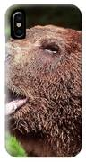 Grizzly Or Alaska Brown Bear IPhone Case