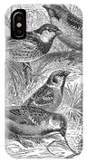 Group Of Sparrows IPhone Case