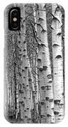 Grove Of Birch Trees IPhone Case