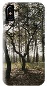 Grove Of Trees In The Ocala National IPhone Case