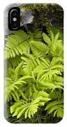 Gymnocarpium Robertianum IPhone Case