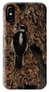 Hairy Woodpecker On Pine Tree IPhone Case