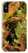 Hampshire Purslane (ludwigia Palustris) IPhone Case