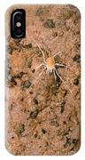 Harvestman Crosbyella Sp. In Cave IPhone Case