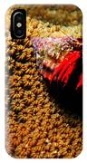 Hermit Crab On Coral IPhone Case