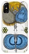 Historical Illustration Of Honey Bee Eye IPhone Case