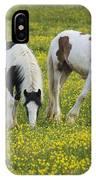 Horses Grazing, County Tyrone, Ireland IPhone Case