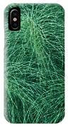 Horsetail Fern IPhone Case