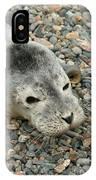 Injured Harbor Seal IPhone Case