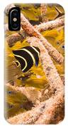 Juvenile French Angelfish Among French IPhone Case