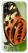 Large Tiger Butterfly IPhone Case