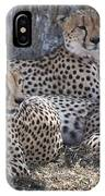 Leopards, Kenya, Africa IPhone Case