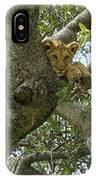 Lion Lookout IPhone Case