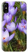 Little Purple Crocuses IPhone Case