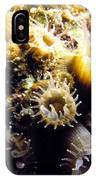 Live Coral Feeding At Night IPhone Case