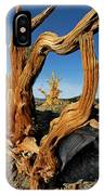 Looking Through A Bristlecone Pine IPhone Case